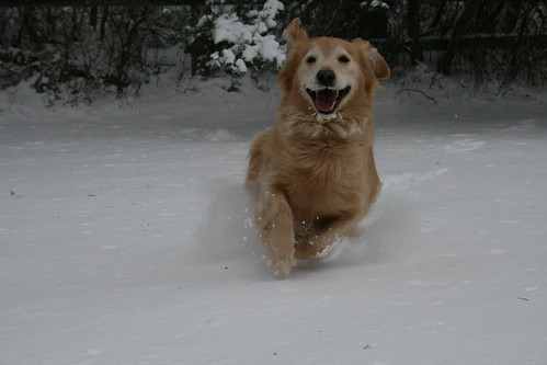 happy snow dog by cordfish, on Flickr