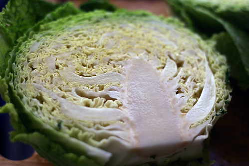 Cabbage 1