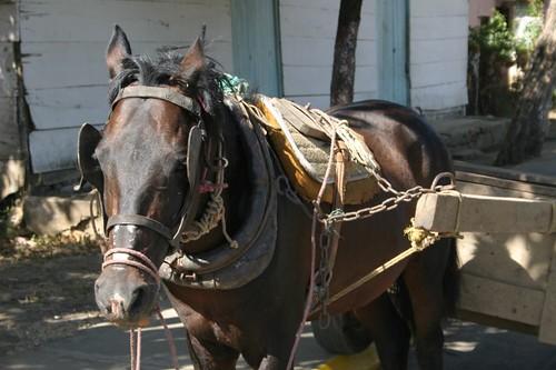 Horse. San Jorge - Nicaragua.