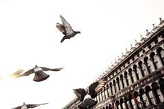 Вольные птицы