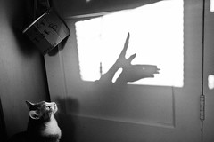 birdy (Montauk Beach) Tags: door shadow bw bird cat neko waitforit lookatit