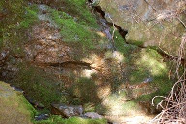 1water-over-moss.jpg