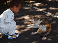 P4111349_ (marimo_kuo) Tags: animals cat olympus taipei 2009  tamsui e620