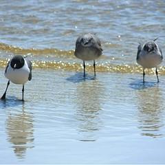 birds squ