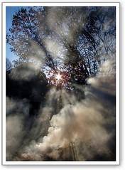Sun beams (DWB Photography) Tags: sun tree god smoke beams