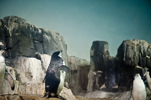 Central_Park_Zoo-2