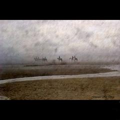 Horses in the mist (genevieve van doren) Tags: sea horses people mer mist water sand eau sable brouillard gens chevaux cavaliers weekendeaster weekenddepacques