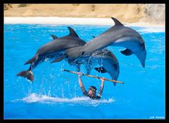 Acrobacias (Darkmelion) Tags: españa naturaleza juegos dolphins tenerife animales salto delfines loroparque espectaculo sincronizacion espaa