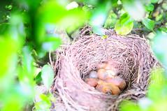 under the bird.. (sid78000) Tags: bird nature child birdy