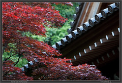 Japanese Maple and Jindai Temple