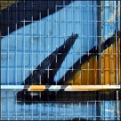 (Katerina.) Tags: blue lines wall grid pattern urbandecay vivid walls bluebrown haphazart haphazartblue abstractartaward haphazartlines ministract haphazartsquare