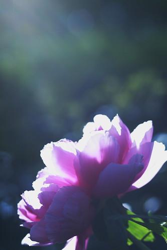 天国の花 Flower in Heaven