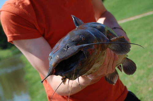 Connors catfish. :)