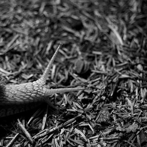 365 days | 174 | snail