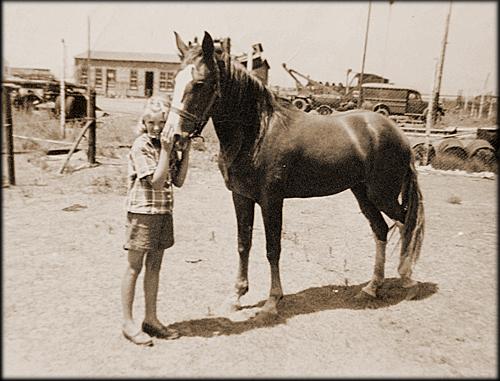 dondi-horse