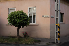 Corvin-48-as sarok (sonofsteppe) Tags: county street old city pink windows urban stilllife plants house detail building tree green leaves electric wall architecture facade corner concrete 50mm daylight hungary exterior outdoor painted overcast nobody pole foliage explore lush deciduous exploration renovated gyula frontage wallscape sonofsteppe pusztafia békés corvinutca 48asutca urbanlifeoftrees