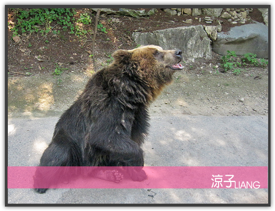 愛寶樂園(動物篇)11