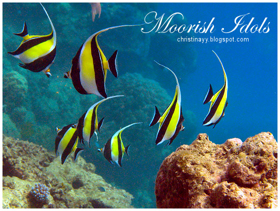 Cairns: Moorish idols