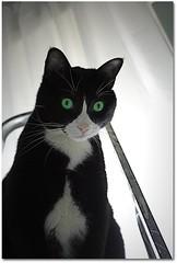 Il gatto venuto dallo spazio (marta) Tags: blackandwhite cats chats gatti vinicio acloseencounterofthefurredkind anchelelentiacontattocolorate
