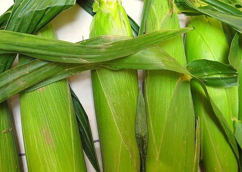 Snuggle corn 2