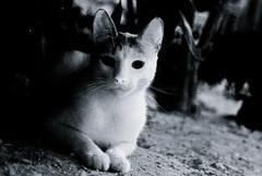 Ghost Cat (Studio Neko) Tags: white halloween cat ghost grain creepy horror phantom noise grana