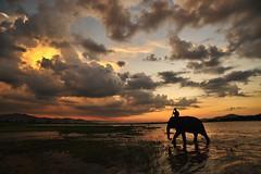 Elephant at Lak Lake 3 (Malcolm Fackender) Tags: sunset elephant nikon vietnam laklake d700 spotlightonasia malcolmfackender