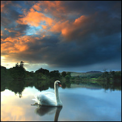 Swan (angus clyne) Tags: new old blue trees winter light sunset shadow red cloud lake west reflection bird rain night forest flow island gold islands scotland swan pond day glow shine place wind angus stones south deep scottish bank spray glen east shore stepping late magical gloaming clyne colorphotoaward