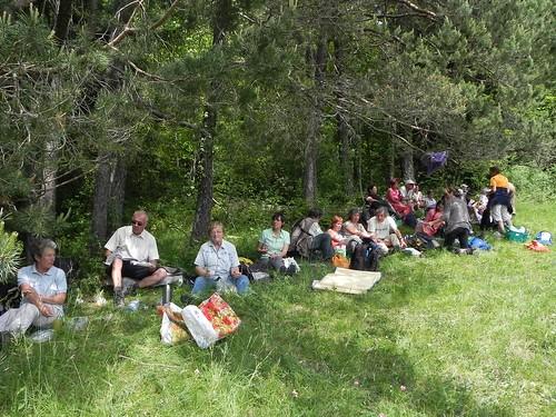 A l'ombre des pins sylvestres - Planfait 034
