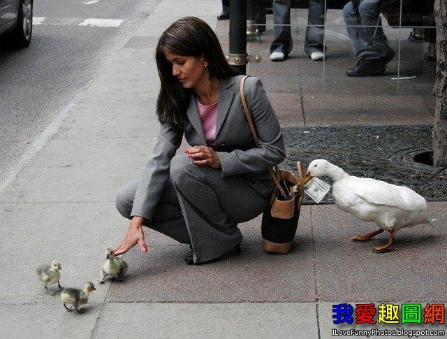 精心策劃的偷竊案 Ducks[我愛趣圖網]