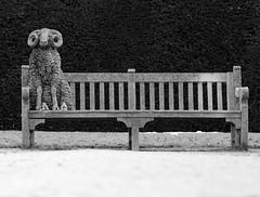 6931 - Sheep on a bench (r-and-b) Tags: bw sculpture white black bench sheep ram baa rufford nottinghamshire mansfield blackwhitephotos