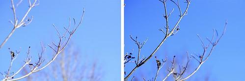 branch diptych