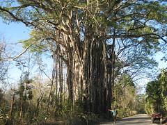 Quad-Tour Nicoya / Costa Rica