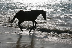 Black Beauty (Christine Schmitt) Tags: tobago buccoo horse beach gallop 400dtheme2009 flickrestrellas quarzoespecial galope loh nature movement moving sand black water airborne silhouette sea strand meer pferd galopp natur bewegung schwarz wasser cheesy42