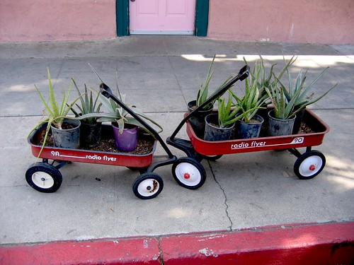 Succulent Radio Flyer