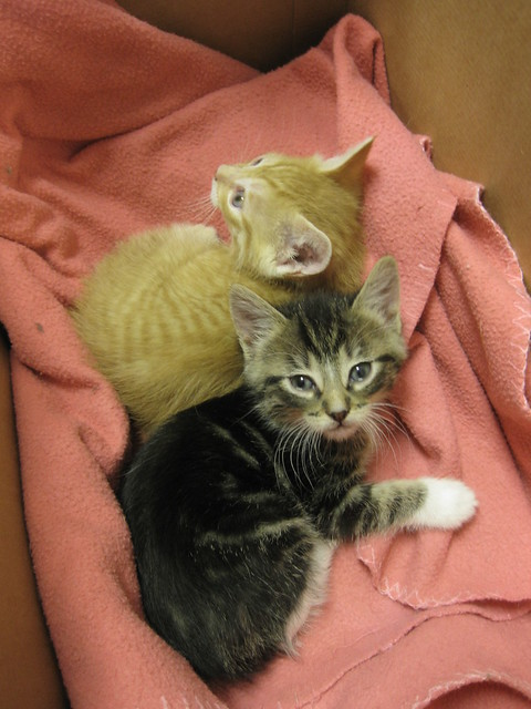 Bo amp Arrow  Siblings by MendocinoAnimalCare