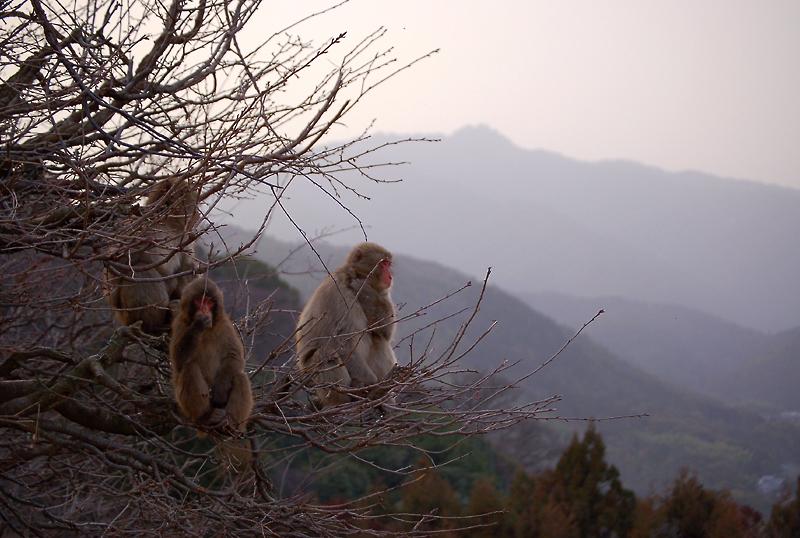 _monkey-31_