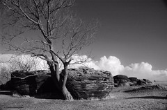 Rock and Cloud Formations (frank thompson photos) Tags: bw tree rock clouds cumulus kansas visualart rockcity rockformations ottawacounty concretions cannonballconcretions nationalnaturallandmark nnl aplusphoto bestkansas