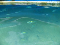 Yellow stripy fish under our boat in Ilha Grande, Brazil