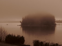 McMicken Island in morning mist