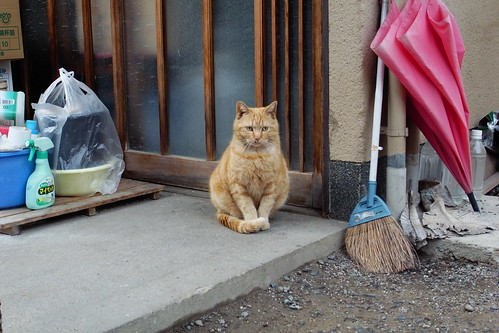 Today's Cat@20090331