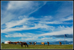 Racing horses of Mongolia (Mr.GG) Tags: sky horses clouds mongolia ggmgl