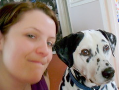 Dawn and Eddie the dalmation (goreckidawn) Tags: dog cute dogs woof animal four furry legs cuddly legged