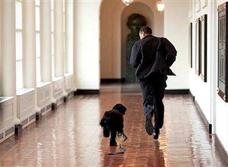 Barack & Bo