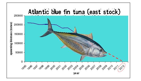 tuna stocks