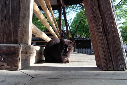 Today's Cat@20090425