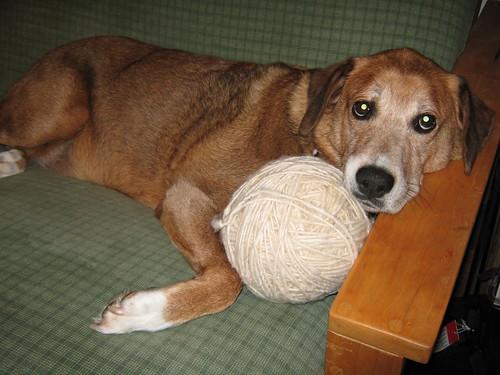 Bruno w peru yarn