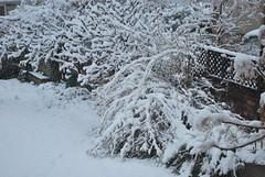 SNOW! Over it!