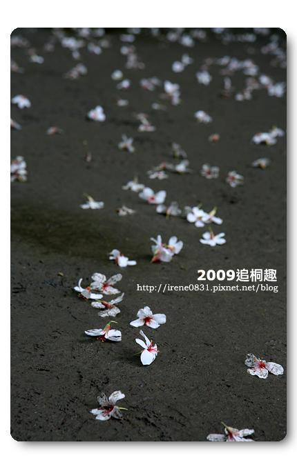 090427_07_油桐花坊