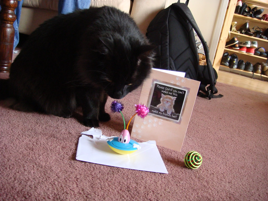 Benson inspects their birthday haul