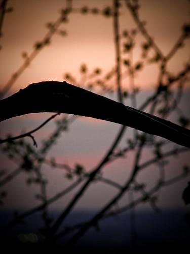 boomerang branch